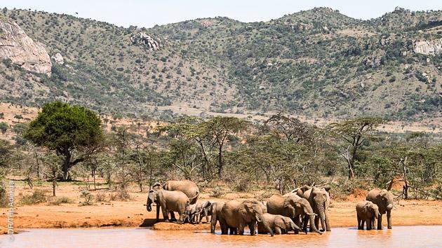 trek avec animaux au Kenya