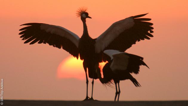découverte à pied de la faune d'afrique du sud