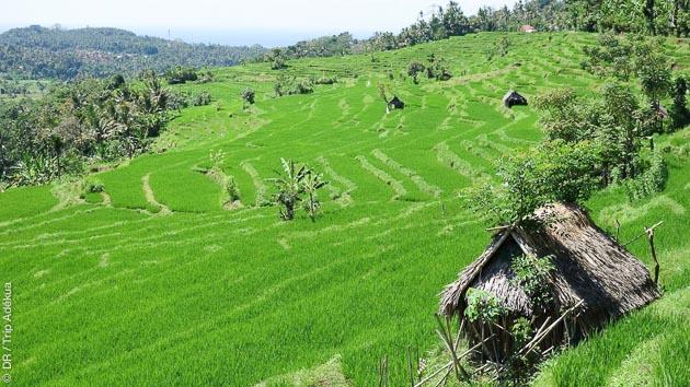 séjour trekking entre Bali et Lombock