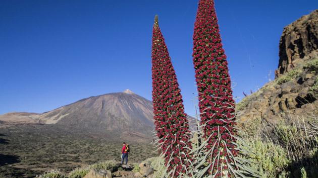 Séjour trekking à Tenerife aux Canaries