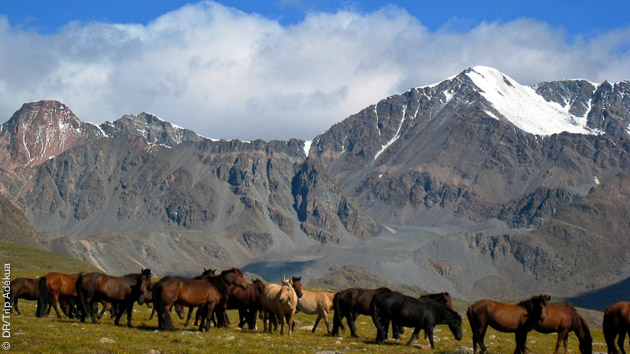 vacances avec de la randonnée pédestre en Mogolie