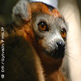 avis séjour à Madagascar