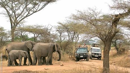 A la découverte de la faune africaine avec ce trek dans les parcs de Tanzanie