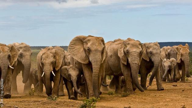 Exceptionnel circuit trek et safari en Afrique du Sud