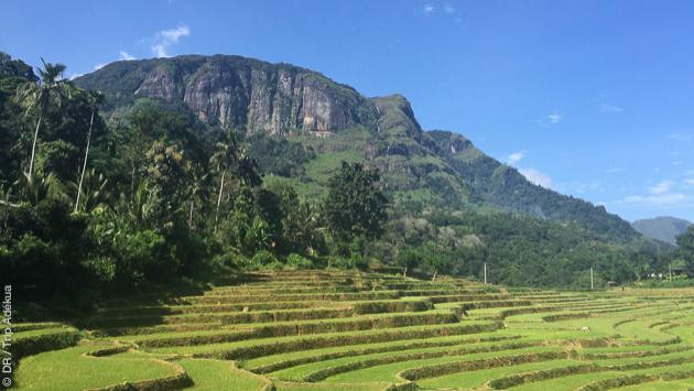 Votre séjour trekking à la découverte du Sri Lanka