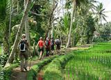 J4 : Wongaya Gede – Jatiluwih – Ubud - voyages adékua