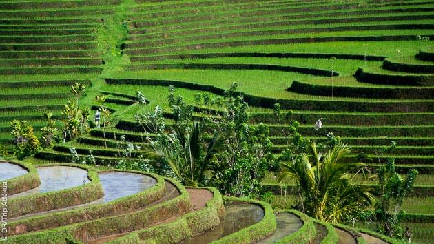 vacances à Bali pour la randonnée