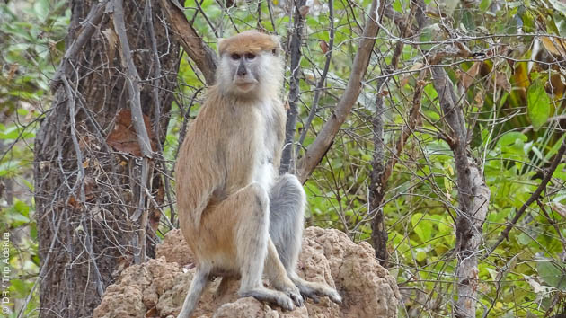 Au coeur d'un parc national, vous adminrez la faune et la flore du Sénégal