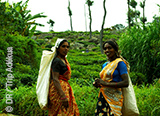 Jours 6 à 11 : les trésors sauvages du Sri Lanka - voyages adékua