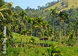 Jours 7 et 8 : Immersion dans les plantations de thé - voyages adékua