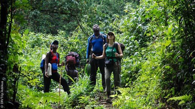 Circuit trek avec bivouac au Cameroun, entre forêt et volcan