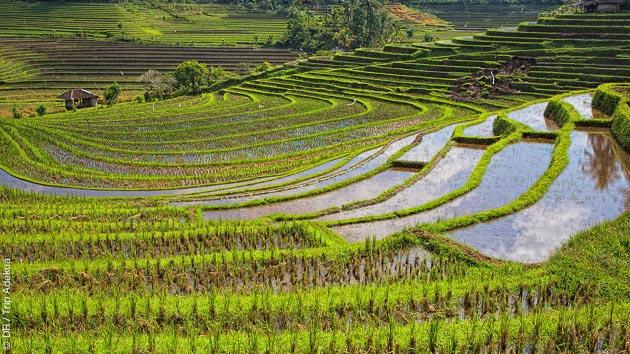 découverte des rizières de Bali