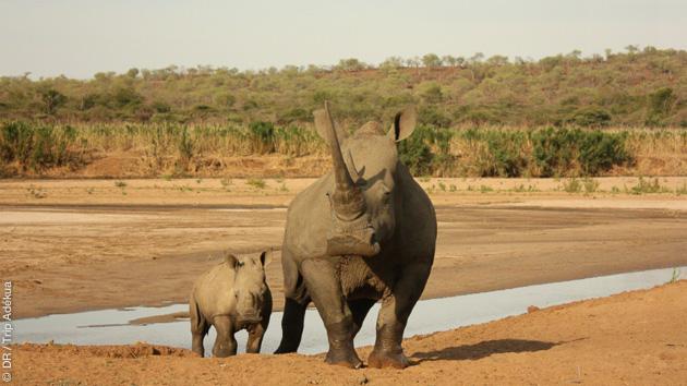 Un séjour trekking pour observer les paysages et les big five d'Afrique du Sud, éléphants, rhinocéros, léopard, buffle et lions