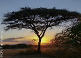 Jours 1 à 4: safari photo dans les plus beaux parcs d'Afrique - voyages adékua