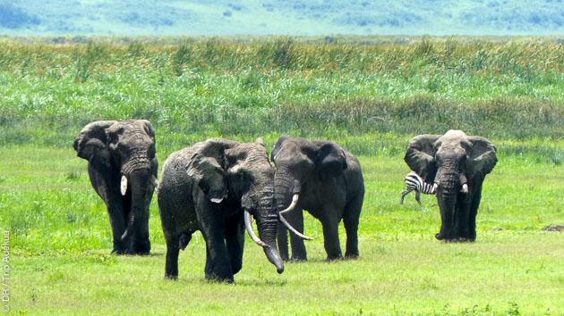 Trek safari photo en Tanzanie, au coeur de la caldeira du Ngorongoro et avec guide massaï