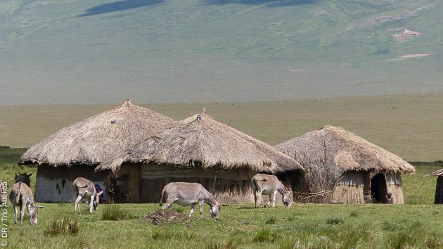 Superbes rencontres avec la faune lors de ce trekking en Tanzanie