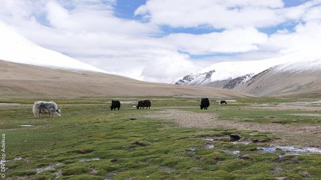 Une expérience de trek incontournable sur les sentiers sacrés du Ladakh