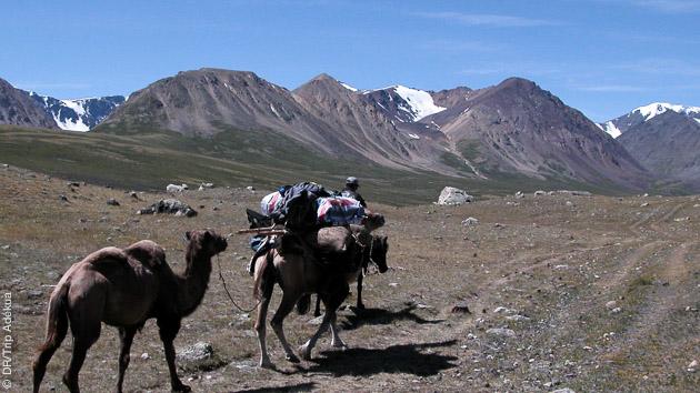 Caravane avec chameaux pour accompagner vos randonnées le long des plaines mongoles