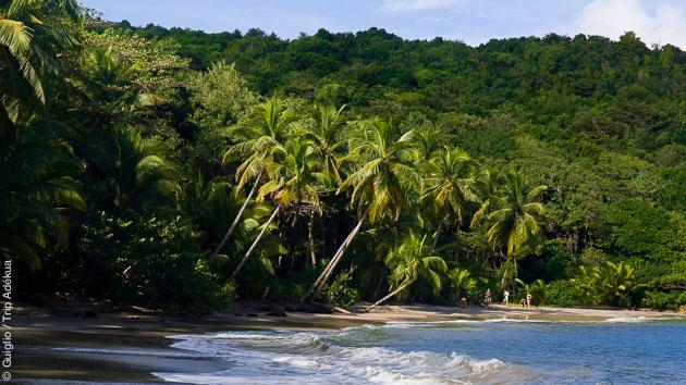 Plages de sable fin et forêt luxuriante : vous ne saurez que choisir lors de ce séjour trek en Dominique