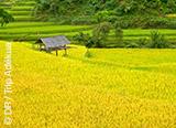 Jours 1 à 8 : premiers pas au Vietnam entre modernité et tradition - voyages adékua
