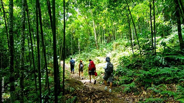 Des parcours de trek inoubliables dans la forêt tropicale de la réserve naturelle de Ngoc Son Ngo Luong au Vietnam