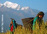 Jours 1 à 6: arrivée à Katmandou et premiers jours de trek au Népal - voyages adékua