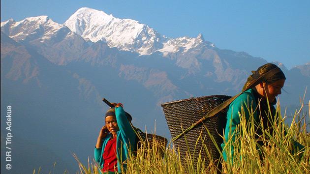 Un itinéraire de trekking autour du Manaslu riche en rencontres