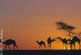 Jours 1 à 4 : d'Atar à Chinguetti, premiers pas dans le désert - voyages adékua