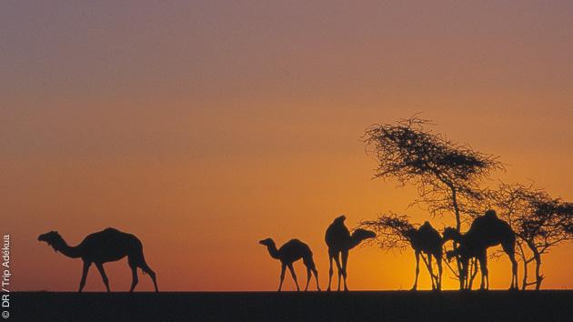 Trek entre l'erg Warane et Chinguetti en Mauritanie
