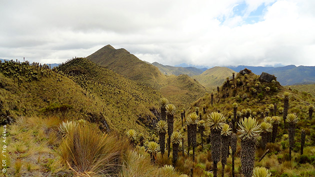 Une flore exceptionnelle, des paysages à couper le souffle : lors de vos treks en Colombie, vous serez émerveillés !