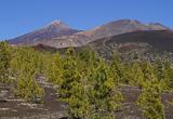 Randonnées dans le parc national du Teide - voyages adékua