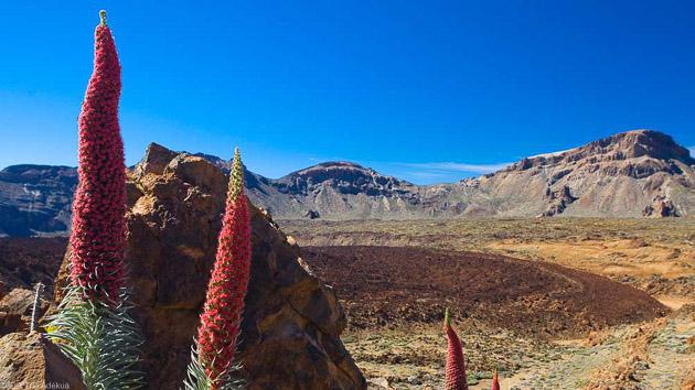 Découvrez les Canaries et l'île de Tenerife pendant un séjour trek