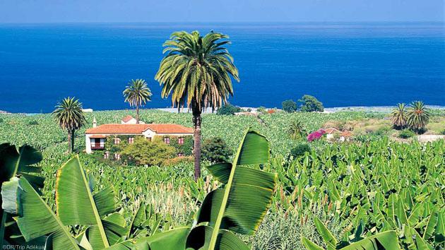 Randonnez en liberté sur l'île de Tenerife aux Canaries