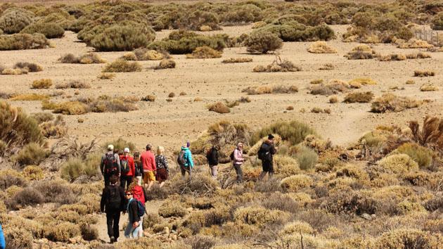 Un séjour randonnée unique pour découvrir Tenerife aux Canaries