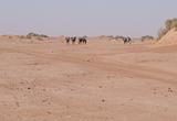 Jours 3 à 5 : les dunes de Zahar, le reg Bousnina et Sidi Naji - voyages adékua