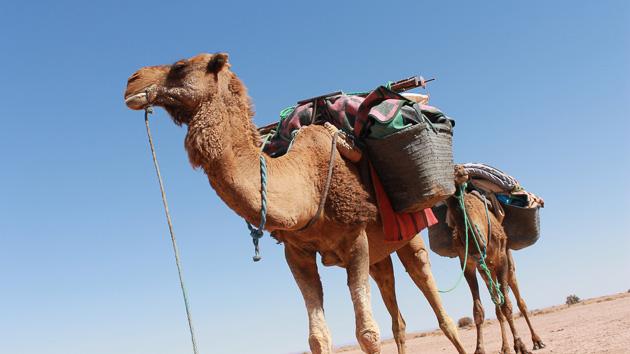 Votre séjour randonnée trekking dans les dunes du Maroc