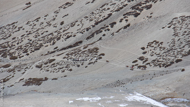 Trekking superbe, rencontres riches pour randonneurs chevronnés au Ladakh