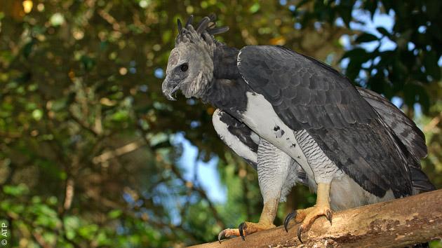 Venez observer le quetzal lors de votre séjour au Panama