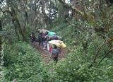 Jours 1 et 4 : à l'assaut du toit de l'Afrique par la voie Machame - voyages adékua