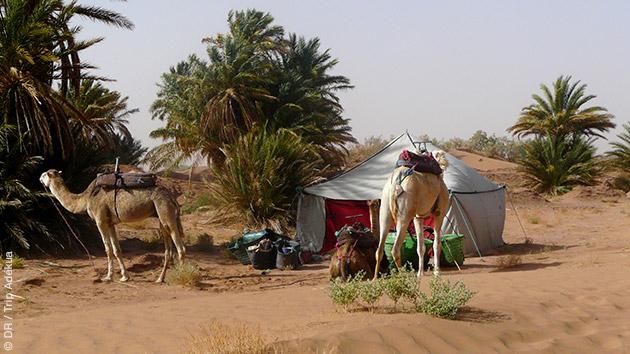 Bivouac dans les dunes du sud marocain, en randonnées trek, en passant par la vallée du Draa et la palmeraie d'Amezrou