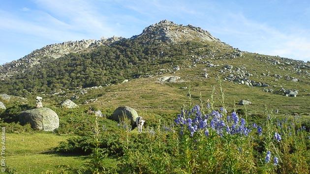 Séjour trekking et randonnées dans le maquis corse