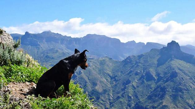 une palette de paysages variés sillonnent votre circuit trek en liberté sur l'île de Gran Canaria
