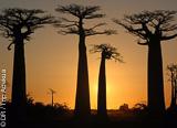 Jours 7 à 10 : des Tsingy de Bemaraha à l'allée des Baobabs - voyages adékua