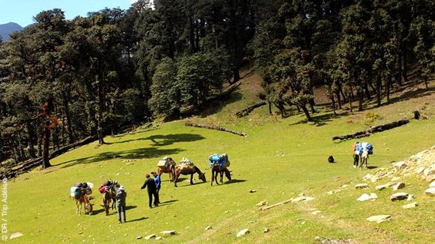Entre les cols et les vallées, venez découvrir les contreforts de l'Himalaya en radonnées pédestres