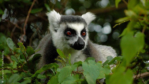 La faune endémique de Madagascar vient vous saluer lors de vos randonnées pédestres